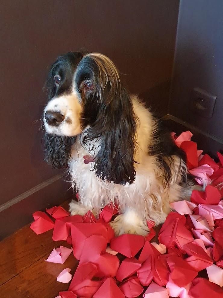 Préparation-vitrine-saint-valentin-la-decotheque-gully-le-chien